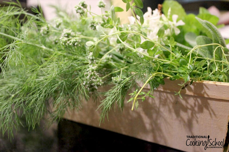 box of freshly picked herbs, including dill weed