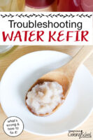 "water kefir grains on a wooden spoon with text overlay: ""Troubleshooting Water Kefir (what's wrong & how to fix it!)"""