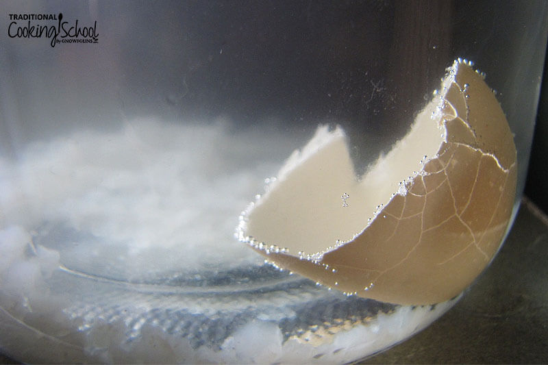 half of an egg shell suspended in brewing water kefir with bubbles collecting on the edges