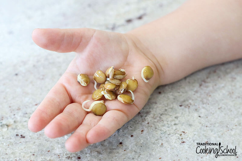 toddler's hand holding out a small handful of sprouted lentils