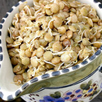 decorative ceramic bowl of sprouted lentils that have been seasoned and drizzled with dressing