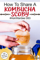 "hands peeling apart a Kombucha SCOBY over a jar of golden-colored brew. Text overlay says: ""How To Share A Kombucha SCOBY #AskWardee 083 (with friends & family!)"""