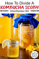 """stack of Kombucha SCOBYS suspended in a jar of brew, with a glass of golden-colored Kombucha in the foreground. Text overlay says: """"How To Divide A Kombucha SCOBY #AskWardee 083 (to share with friends & family!)"""""""