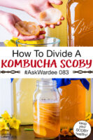 "photo collage of hands peeling apart a Kombucha SCOBY as well as many SCOBYS stacked and suspended in a jar of golden-colored brew. Text overlay says: ""How To Divide A Kombucha SCOBY #AskWardee 083 (keep your SCOBY healthy!)"""