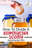 "hands holding two pieces of a Kombucha SCOBY over a jar of finished brew. Text overlay says: ""How To Divide A Kombucha SCOBY #AskWardee 083 (keep your SCOBY healthy!)"""