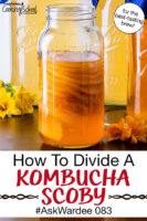 "many SCOBYS stacked and suspended in a jar of Kombucha. Text overlay says: ""How To Divide A Kombucha SCOBY #AskWardee 083 (for the best-tasting brew!)"""