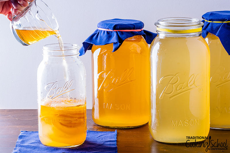 pouring golden-colored Kombucha over a stack of SCOBYS in a half gallon glass jar, with more jars of Kombucha brewing in the background