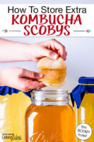"hands peeling apart a Kombucha SCOBY before putting it in a jar of golden-colored brew. Text overlay says: ""How To Store Extra Kombucha SCOBYs (the SCOBY hotel!)"""