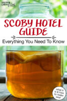 "Kombucha SCOBY suspended in a large gallon jar, half full of brew. Text overlay says: ""SCOBY Hotel Guide: Everything You Need To Know (what it is & how to make one!)"""