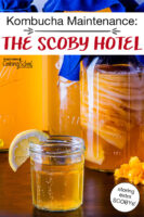 "stack of Kombucha SCOBYS suspended in a jar of brew, with a glass of golden-colored Kombucha in the foreground. Text overlay says: ""Kombucha Maintenance: The SCOBY Hotel (storing extra SCOBYs!)"""