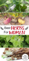 """Photo collage of herbs, including maca root, red raspberry leaf, dong quai, and black cohosh. Text overlay says: """"Best Herbs For Women (PMS, menopause, fertility & more!)"""""""