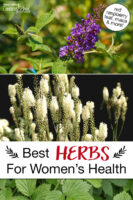 """Photo collage of herbs, including red raspberry leaf and vitex. Text overlay says: """"Best Herbs For Women's Health (red raspberry leaf, maca & more!)"""""""