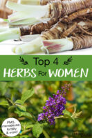 """Photo collage of herbs, including dong quai and vitex. Text overlay says: """"Top 4 Herbs For Women (PMS, menopause, fertility & more!)"""""""