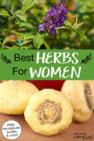 """Photo collage of herbs, including maca root and vitex. Text overlay says: """"Best Herbs For Women (PMS, menopause, fertility & more!)"""""""