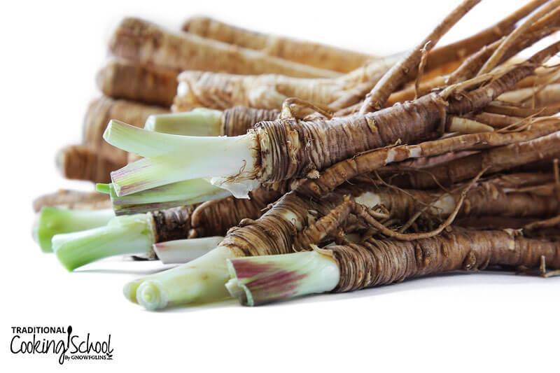 Dong quai root.