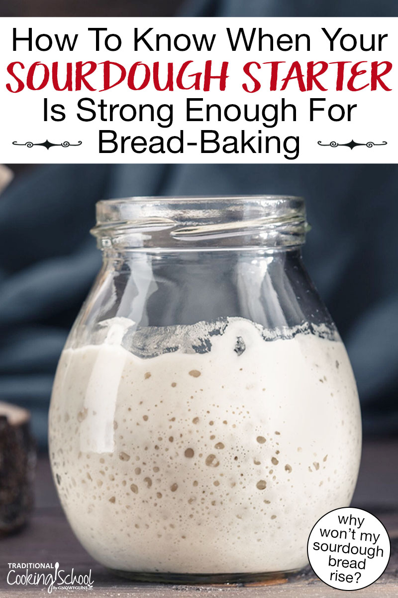 "Bubbly sourdough starter in a small jar. Text overlay says: ""How To Know When Your Sourdough Starter Is Strong Enough For Bread-Baking (why won't my sourdough bread rise?)"""