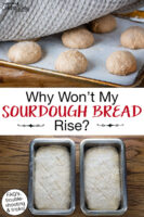 "Photo collage of bread dough in loaf pans and dough balls on a cookie sheet rising. Text overlay says: ""Why Won't My Sourdough Bread Rise? (FAQs, troubleshooting & tricks)"""