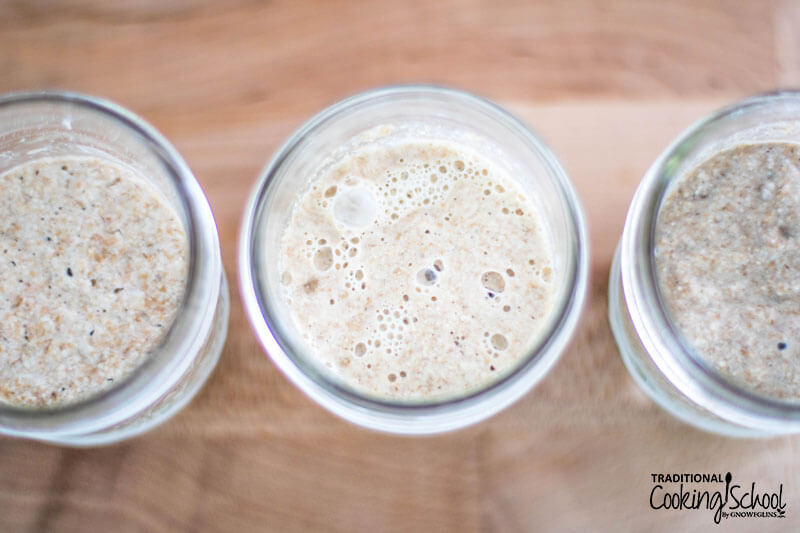 Bubbly sourdough starter in small glass jars.